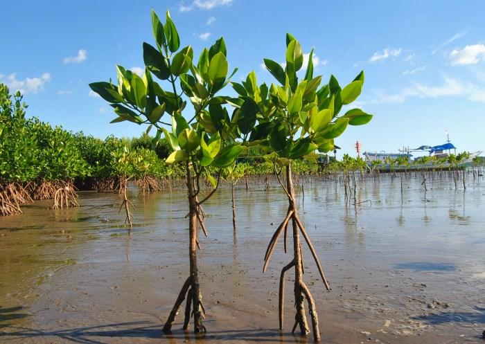 Mangrove Lantebung_Kota Makassar